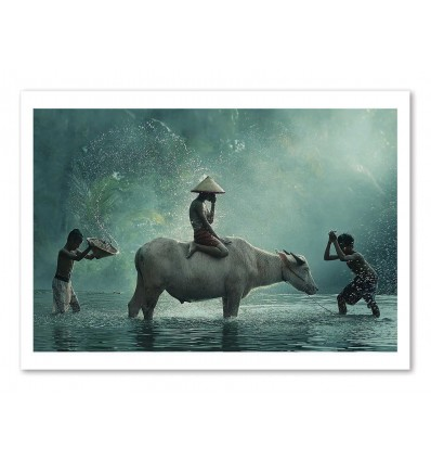 Art-Poster - Water Buffalo - Vichaya