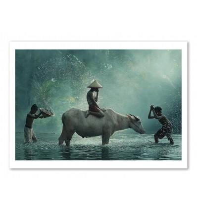 Art-Poster - Water Buffalo - Vichaya