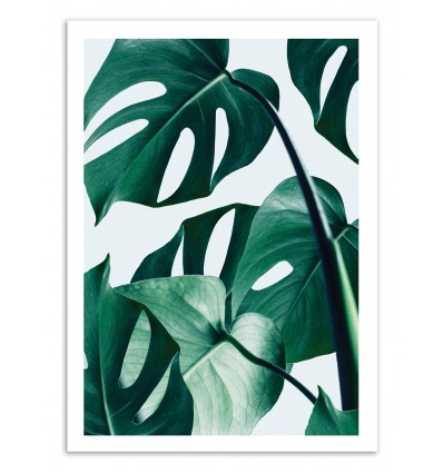 Monstera - 83 Oranges
