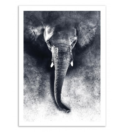Elephant Black and White - Riza Peker
