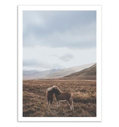 Iceland Horses - Luke Gram