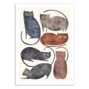 Art-Poster 50 x 70 cm - Cats - Tracie Andrews