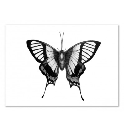 Art-Poster 50 x 70 cm - Butterfly Wings - Ella Mazur