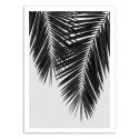 Art-Poster - Palm Leaf Part 3 Black and White - Orara Studio