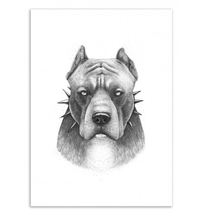 Art-Poster 50 x 70 cm - Pit bull - Valeriya Korenkova