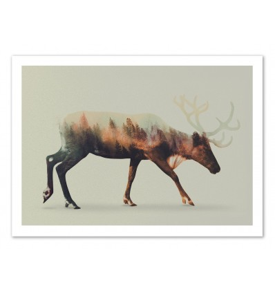 Art-Poster 50 x 70 cm - Reindeer - Andreas Lie