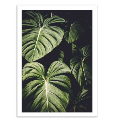 Art-Poster 50 x 70 cm - Leaves - Cascadia