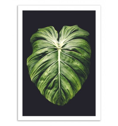 Art-Poster 50 x 70 cm - One leaf - Cascadia