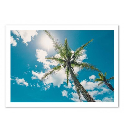 Art-Poster 50 x 70 cm - Palm trees - Cascadia