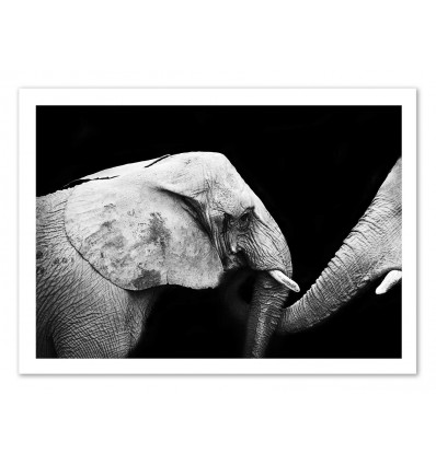 Art-Poster - Elephant Black and White - Julia Bénard