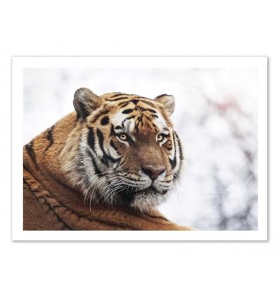 Art-Poster - Tiger - Julia Bénard