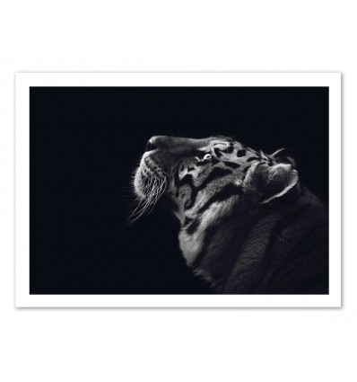 Art-Poster - Tiger Black and White - Julia Bénard