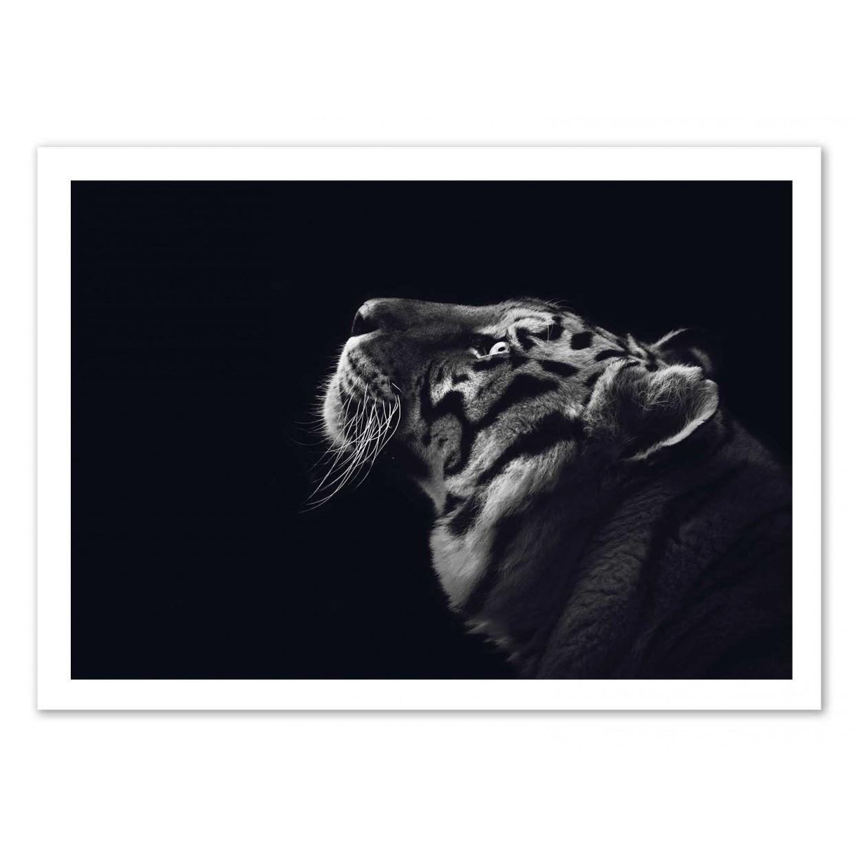 Art poster tiger black and white julia bénard