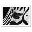 Art-Poster - Zebra eye - Julia Bénard