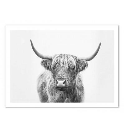 Art-Poster - Highland Bull - Sisi and Seb