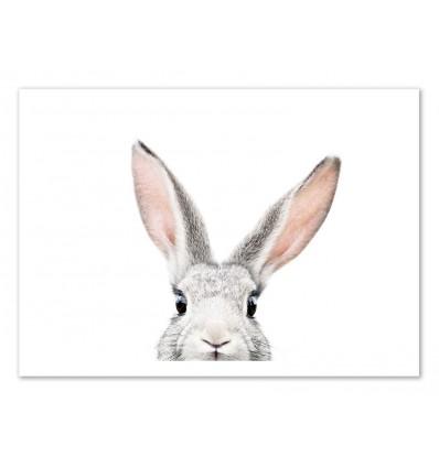 Art-Poster - Peekaboo Bunny - Sisi and Seb