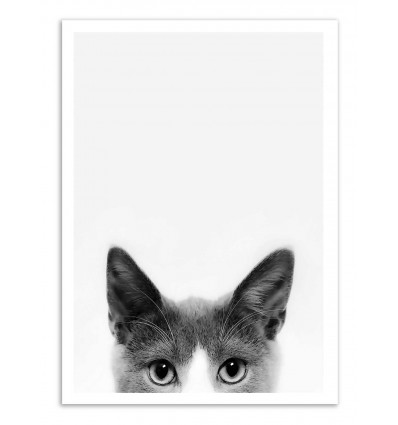 Art-Poster - Peekaboo Cat - Sisi and Seb