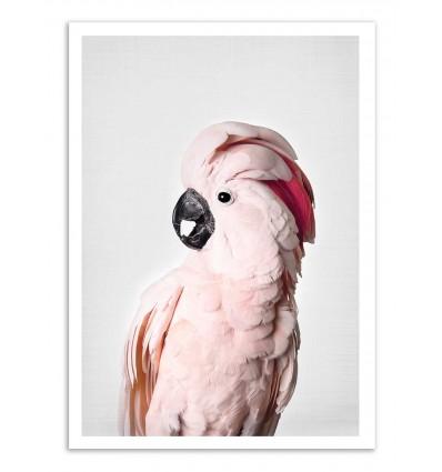 Art-Poster - Pink cockatoo - Sisi and Seb