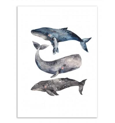 Art-Poster - Whales - Ploypisut